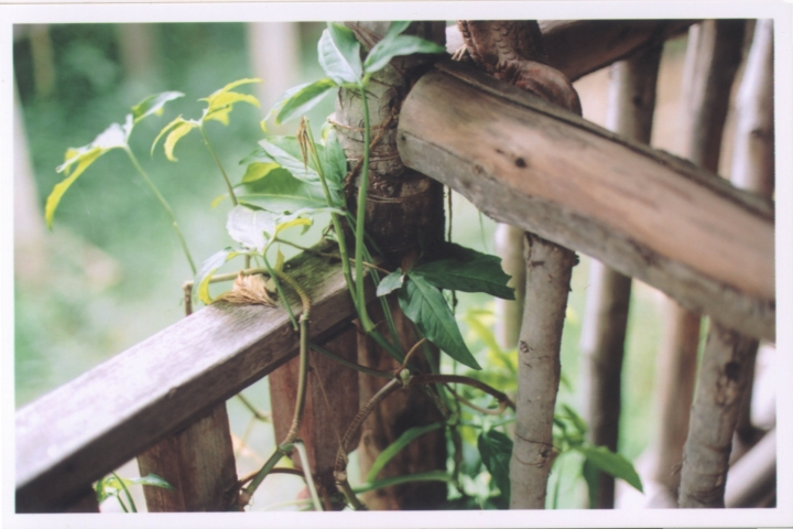 Thailand2004_04
