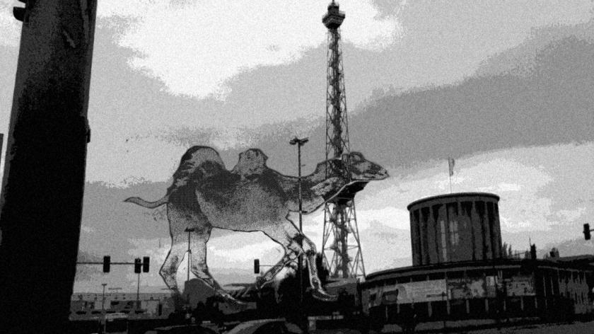 camel014