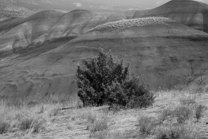 Being in Desert_05
