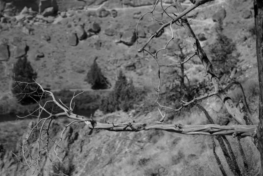 Being in Desert_07